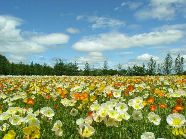 primavera, campos, flores, plantas, portugal, frança